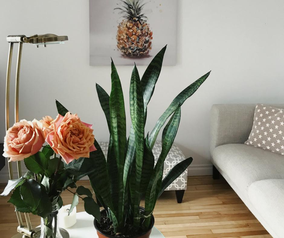 salon décoration