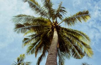 palmier tempête Négril école Jamaïque